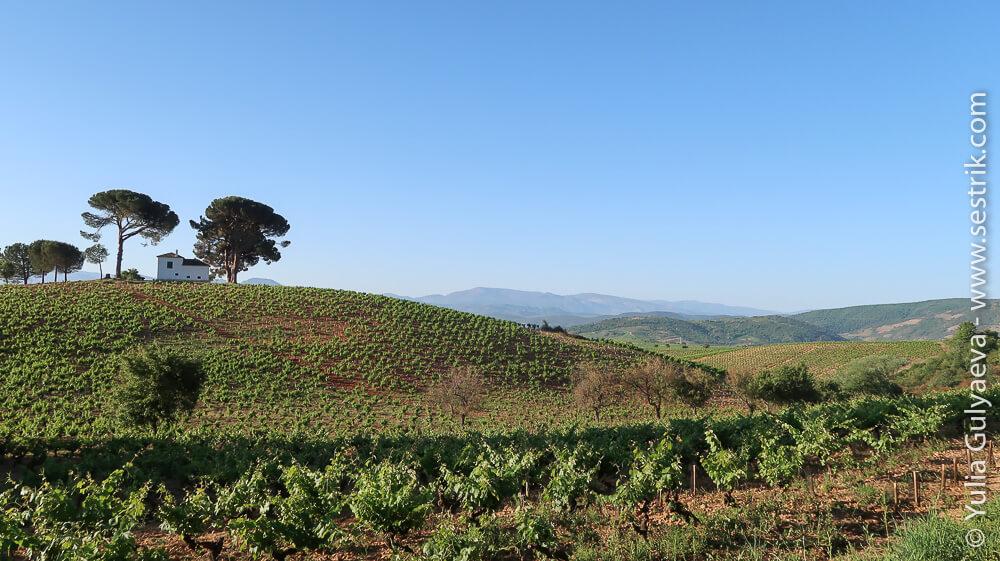 виногражные поля провинции Бьерзо