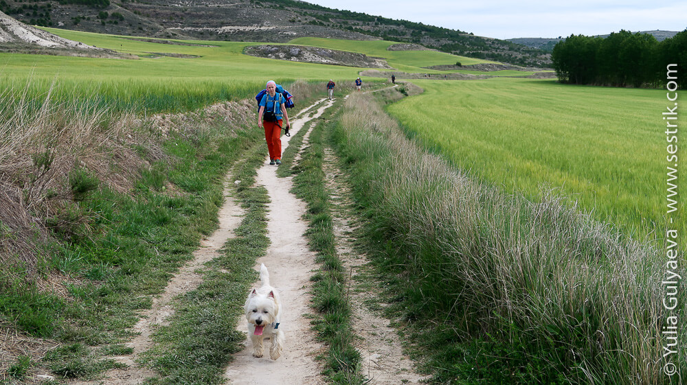 6 день пути Камино Франсез с собакой