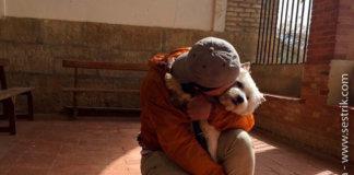 с собакой по Пути Сантьяго