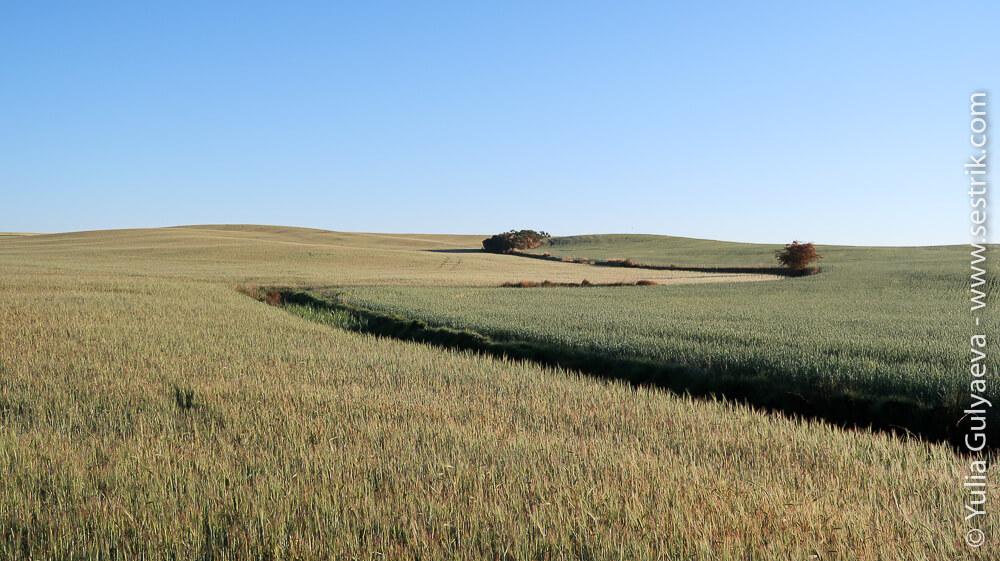 пшеничные поля с заставки виндоус