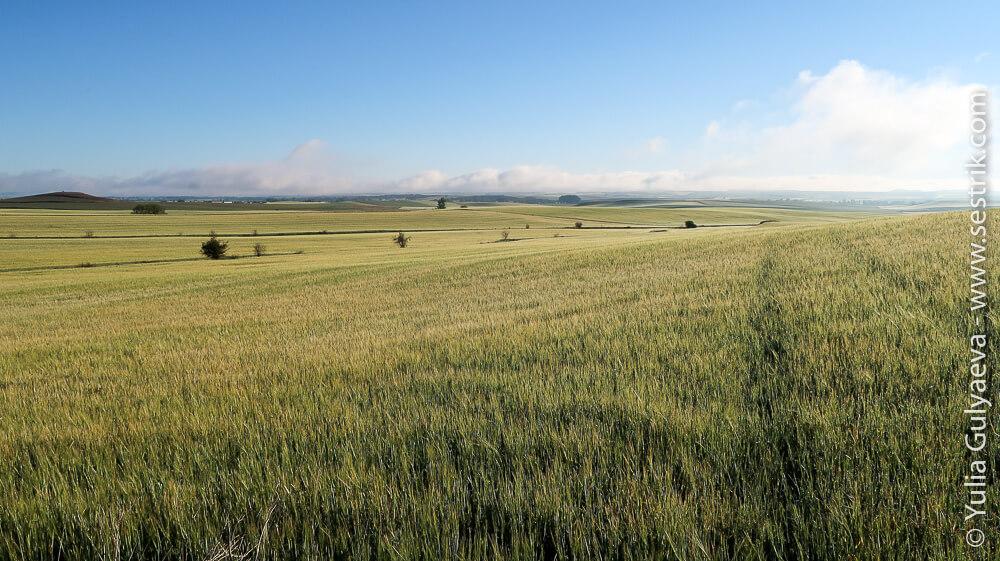 Camino-Frances-day-9 зеленые поля