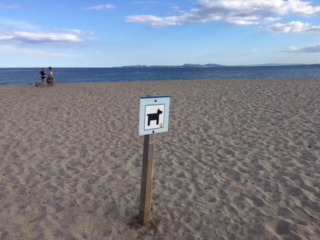 собачий пляж в испании