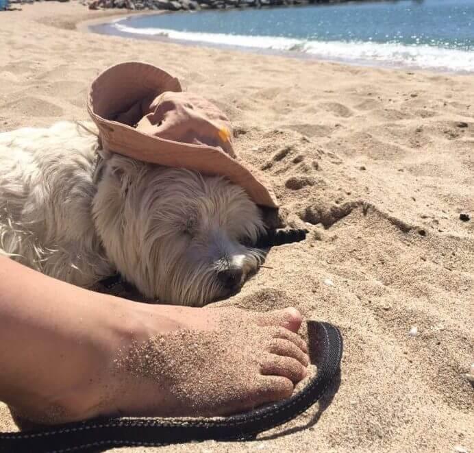 с собакой на майорку