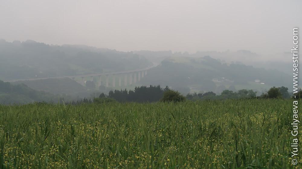 туман в полях