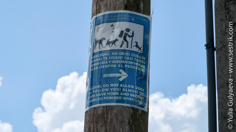 Обзявление не прикармливать собак