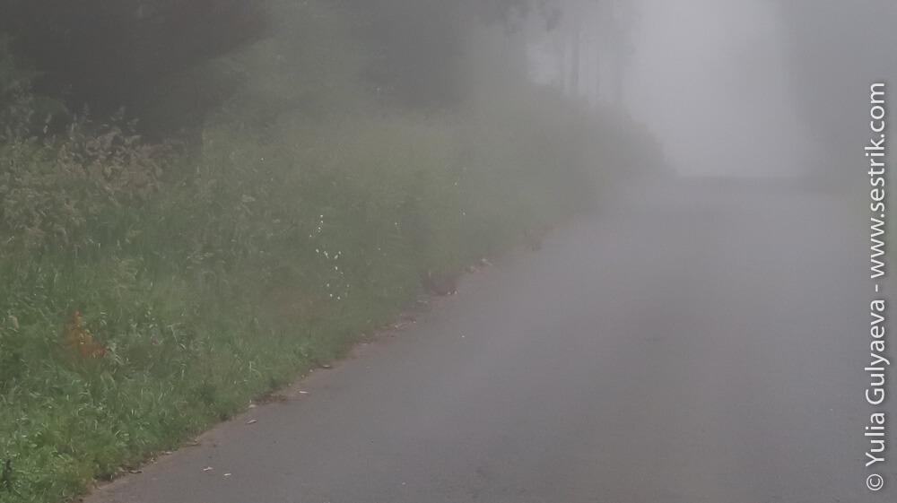 Туманная дорога пути Святого Иакова