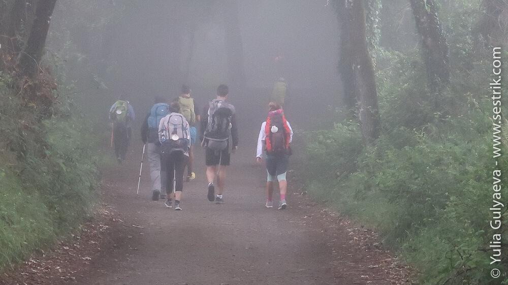 Пилигримы утром в тумане