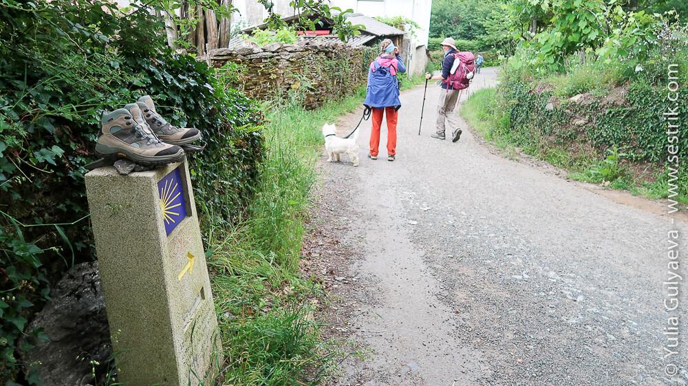 Пилигримы с собакой на пути Сантьяго