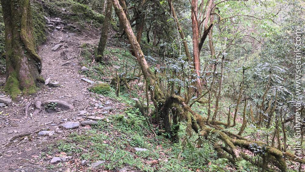Тропа из Гандрук в Тадапани