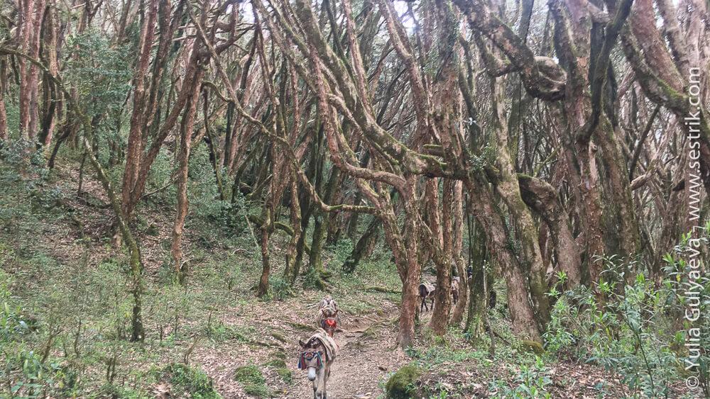 Тропа через лес