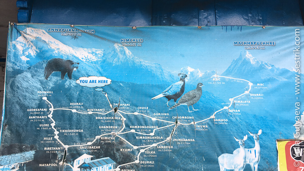 ЖИвотные в Гималаях