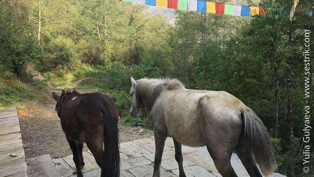 лошади в Непале