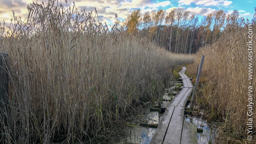 Тропа на болоте рядом с Хельсинки