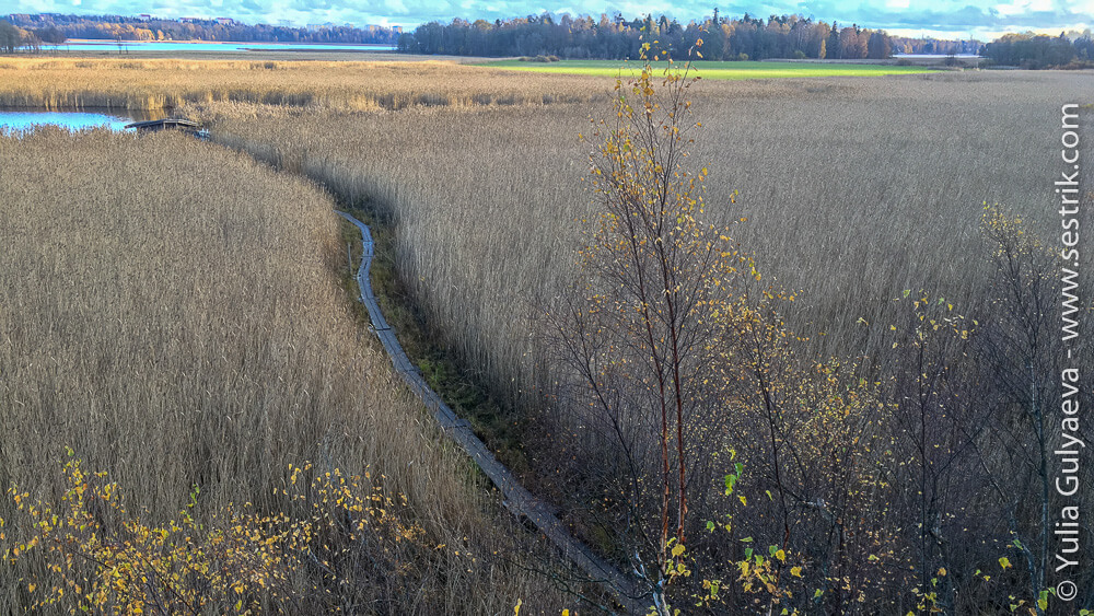 Вид на тропу на болоте сверху с вышки