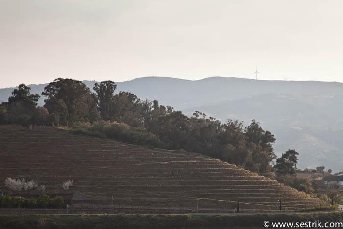 фото виноградные поля