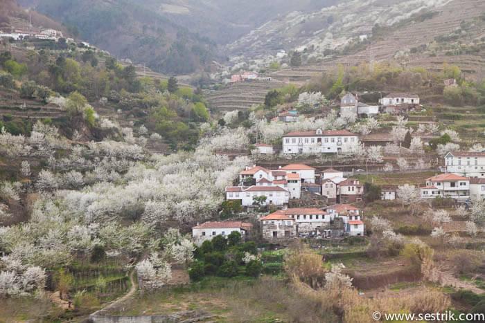 цветение миндаля в долине реки Доро