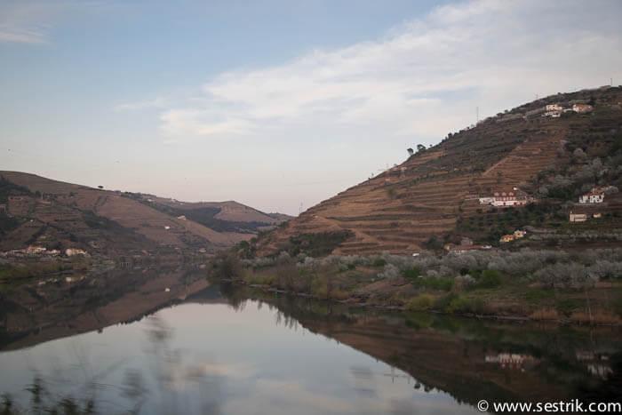 фото Португалии где растет виноград