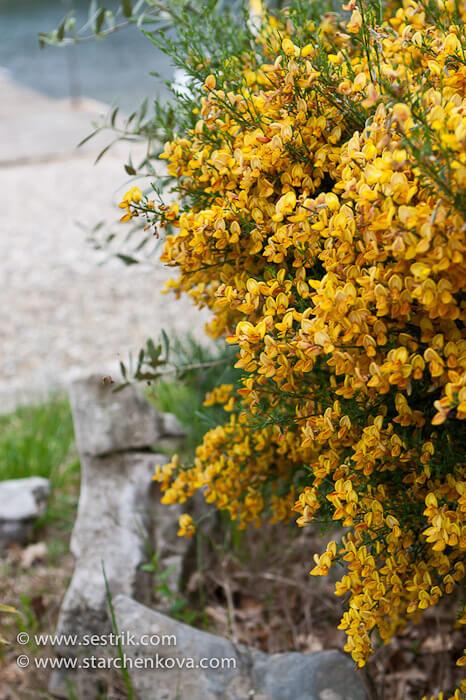 весна на полуострове Истрия