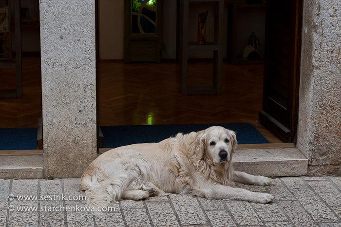 собака у входа в магазин