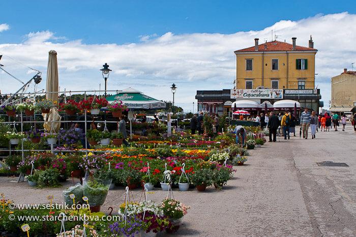 цветочный базар в Ровинь