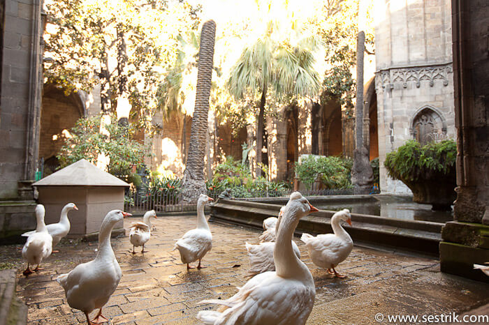 Фотографии Барселоны готический квартал