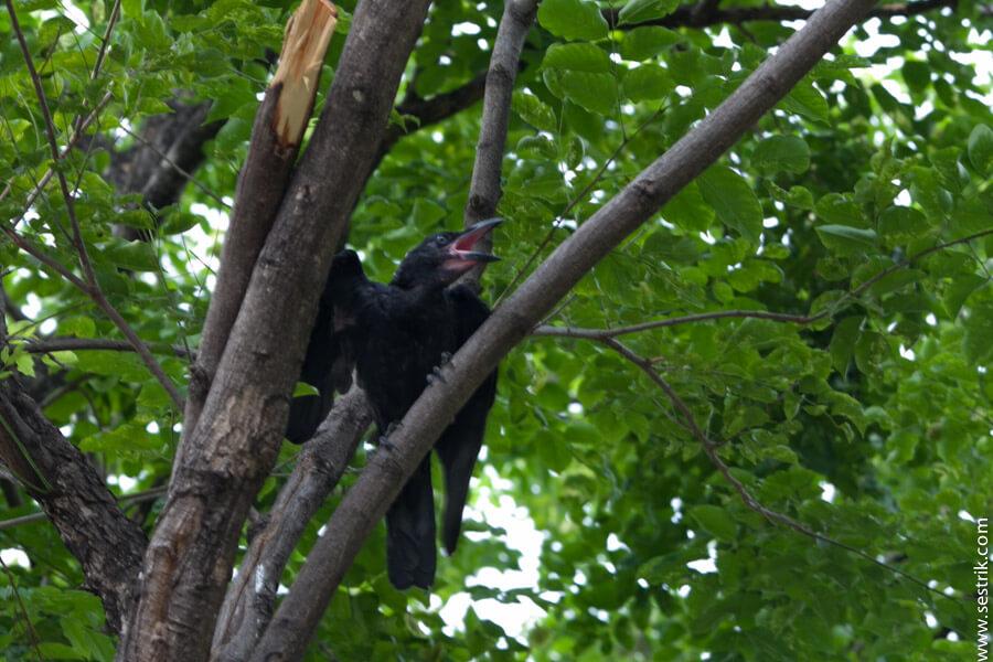птицы в парке Бангкока