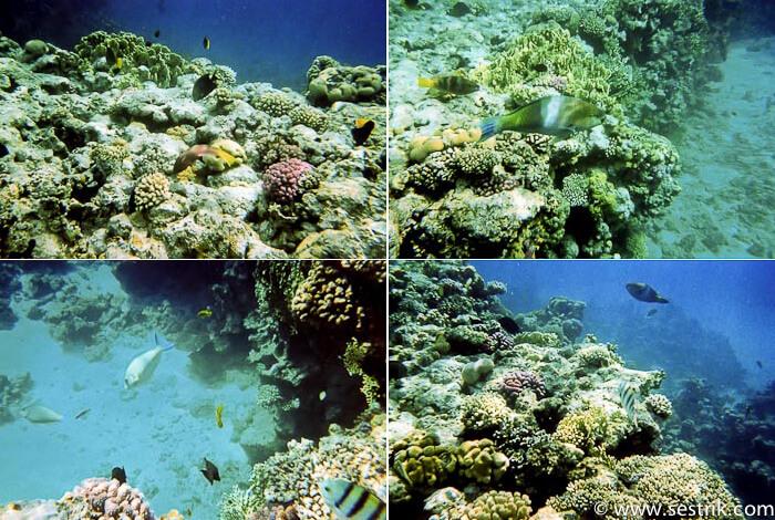 коралловые рыбы Красного моря